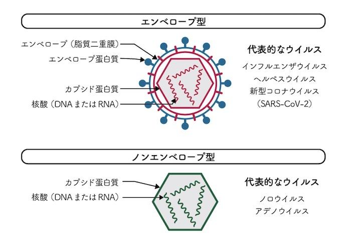 エンベロープウイルス 構造