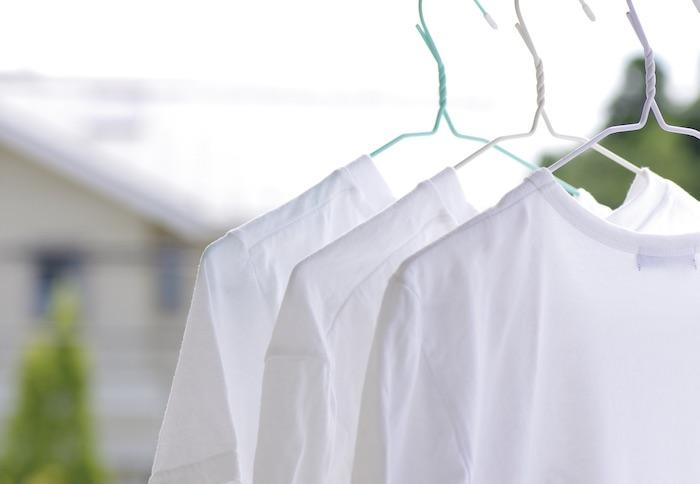 カメムシはなぜ洗濯物につくのか
